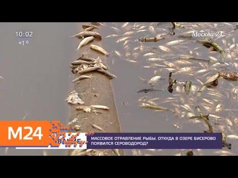 Названа возможная причина гибели рыбы в озере Бисерово - Москва 24