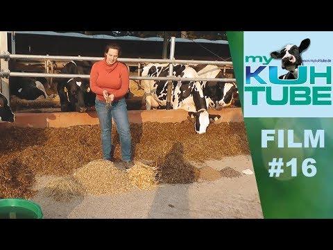 Wie viel frisst und säuft eine Kuh am Tag? - My KuhTube Film 16