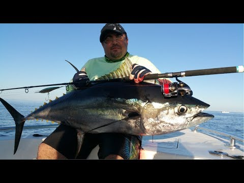 YellowFin Tuna Fishing | Fujairah - UAE