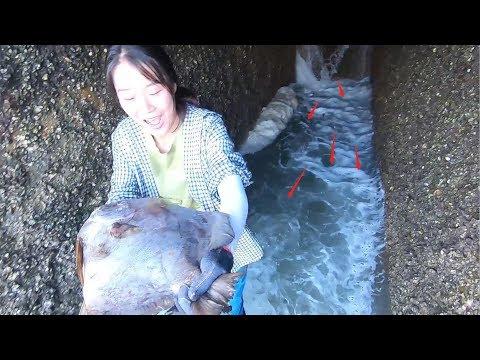 超级排水口全是大鱼,皮皮出洞被吓惨了,老板竟想追着皮皮要鱼
