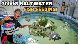 MASSIVE 3000G SALTWATER REEF POND FEEDING!! (catching bait)