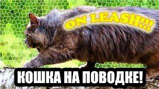 КОШКА ГУЛЯЕТ НА ПОВОДКЕ! | CAT WALKS ON LEASH!