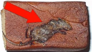 most shocking things found in your favorite foods