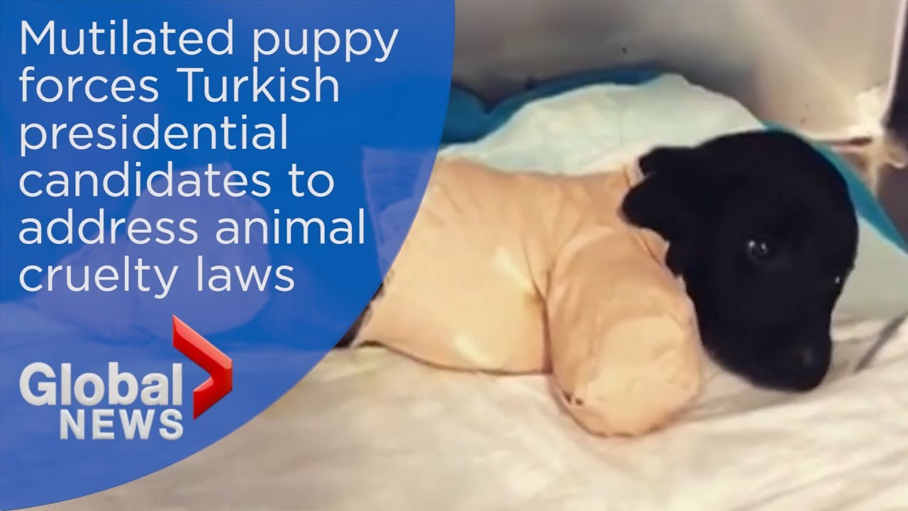 Tortured puppy left for dead in Turkish forest dies during emergency surgery