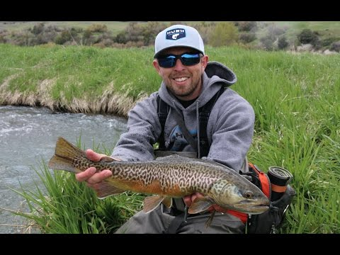 HUGE TIGER TROUT AND BIG RAINBOWS
