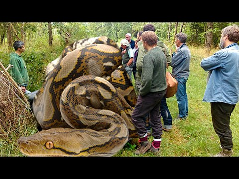 WORLDS LONGEST SNAKES!! | BRIAN BARCZYK