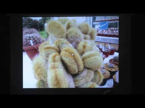 Hellenic Cactus and Succulent Society - Cristata & Monstrosa, Cacti & Succulents