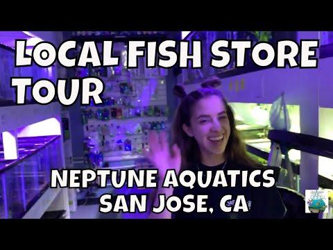 Neptune Aquatics EPIC Local Fish Store Tour!