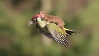 Спасение животных Наидобрейшие случаи поступков животных