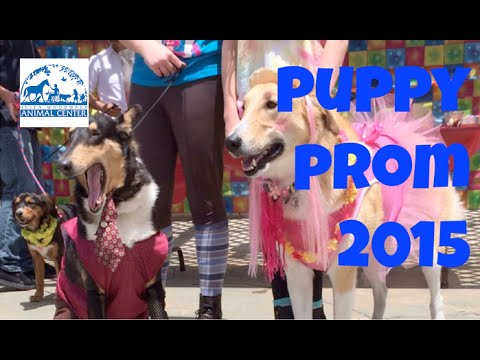 None - 7th Annual Puppy Prom At An Animal Shelter