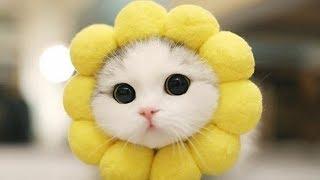 「猫かわいい」 すごくかわいい子猫 - 最も面白い猫の映画2017 #110 thumbnail