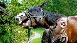 Все мы чуточку лошади