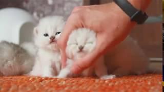 Когда котята, лучший в мире антистресс!