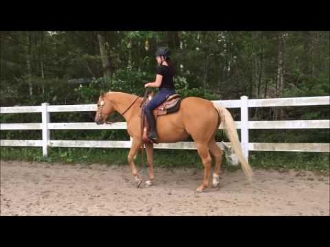 Stockbridge School of Agriculture-Equine Management