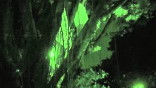 江翠國中抱樹第16小時,警消上樹抓人.