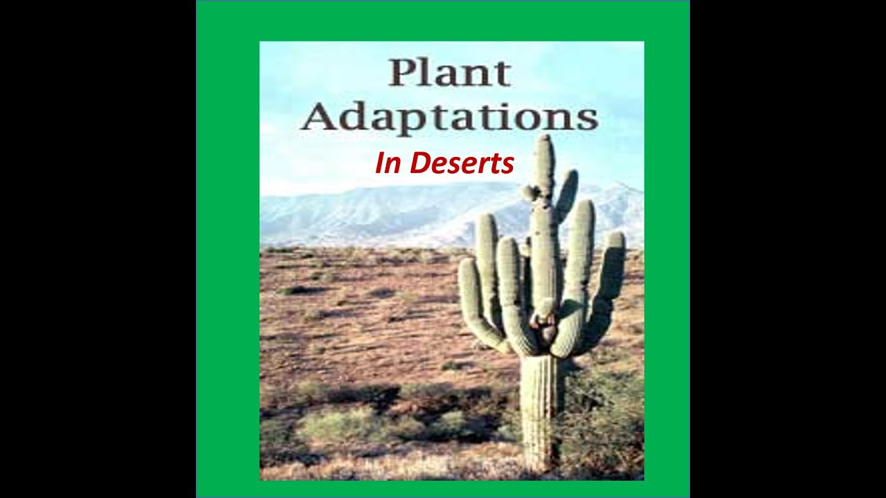 plant adaptation Of all the wonderful adaptations in the animal kingdom, perhaps the most important is the habit of living together in communal or family groups.