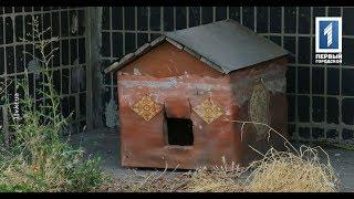 В Кривом Роге неизвестные отравили бездомных собак