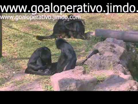 Zoo São Paulo 2011 Parte 3
