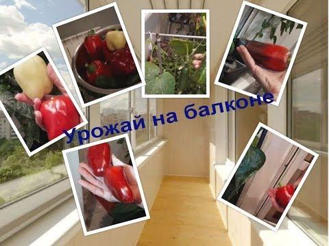 Вопрос: Как подготовить семена созревших овощей и фруктов для посадки на балконе?