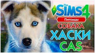 THE SIMS 4 ПИТОМЦЫ CAS - СОБАКА ХАСКИ