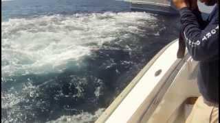 Venice Shrimp Boats 2013