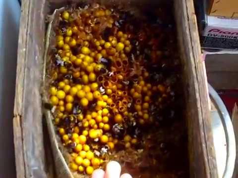 Автор: торгни линдгрен, книга: шмелиный мед. Полный текст книги ( читать онлайн): шмелиный мед. Скачать эту книгу (75k) в формате: fb2, lrf, epub,