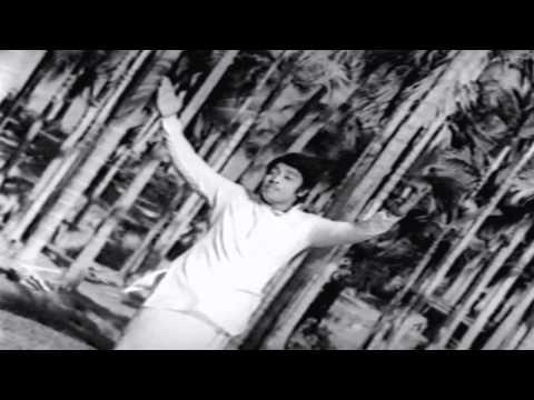 Muthana Muthallavo Movie : Punnai Maram Onu | P.Susheela Hit Song