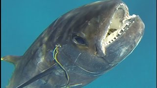 Spearfishing East Africa 2014
