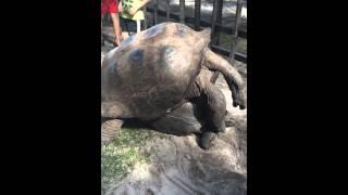 Секс в мире черепах