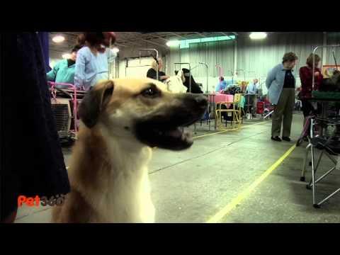 Meet the New Dog Breeds