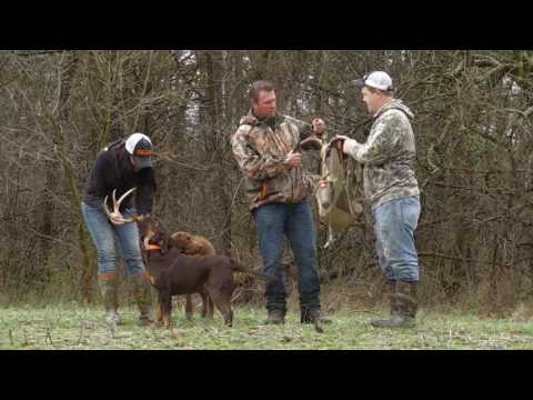 Shed Hunting With Dogs