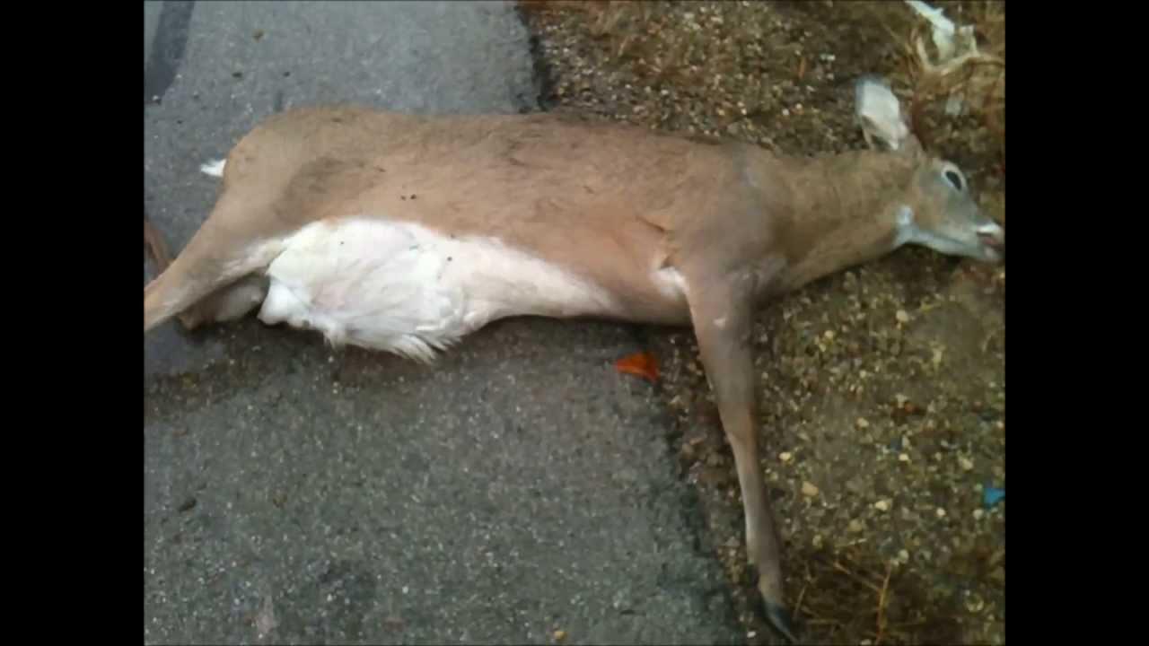 jto 87 deer gets