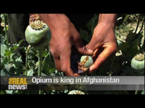 Opium is king in Afghanistan