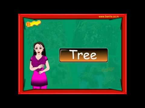 Learn names of Trees Preschool kids