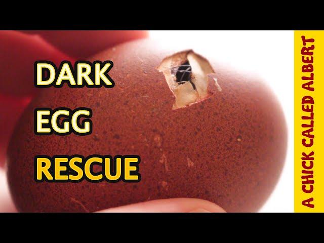 Dark Egg needs help Hatching