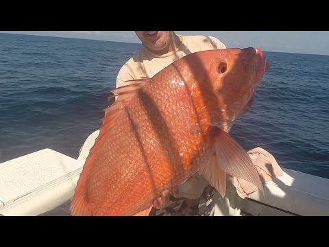 Offshore Fishing Trip: 25lb Red Snapper