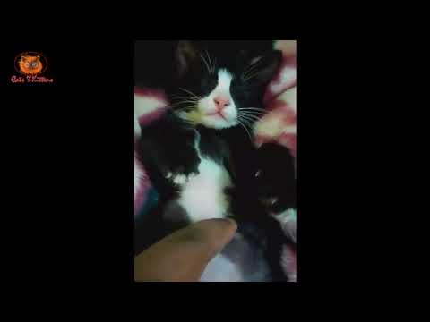 cats story -  some memorable moment of cat life - Human and cat love story cats and kittens video