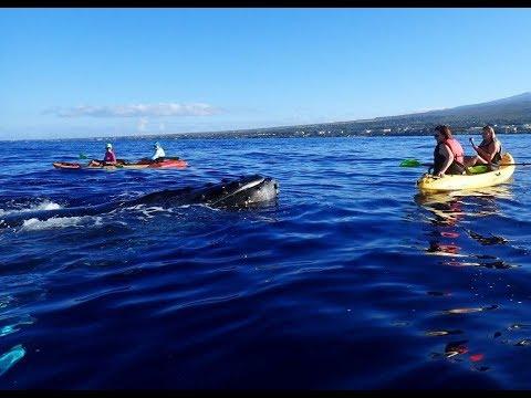 We Got Mugged On A Maui Whale Watching Tour