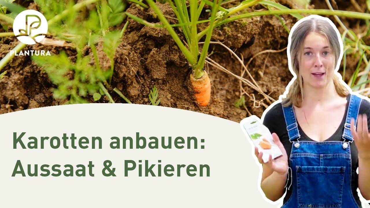 Atemberaubend Karotten anbauen: Aussaat & pikieren (Anleitung) - YouTube #TI_62