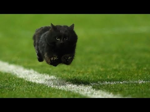 UNEXPECTED Wild Animals Interrupting Sports II COMPILATION