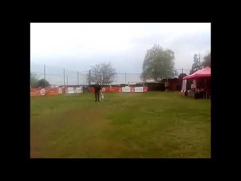 Husse Dog Dancing Cup, Délegyháza (HU), Suszter Attila & Ravyl, Hobby Open