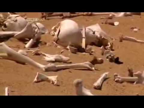 The 20th Century's First Genocide: germans Exterminate Africans in Namibia