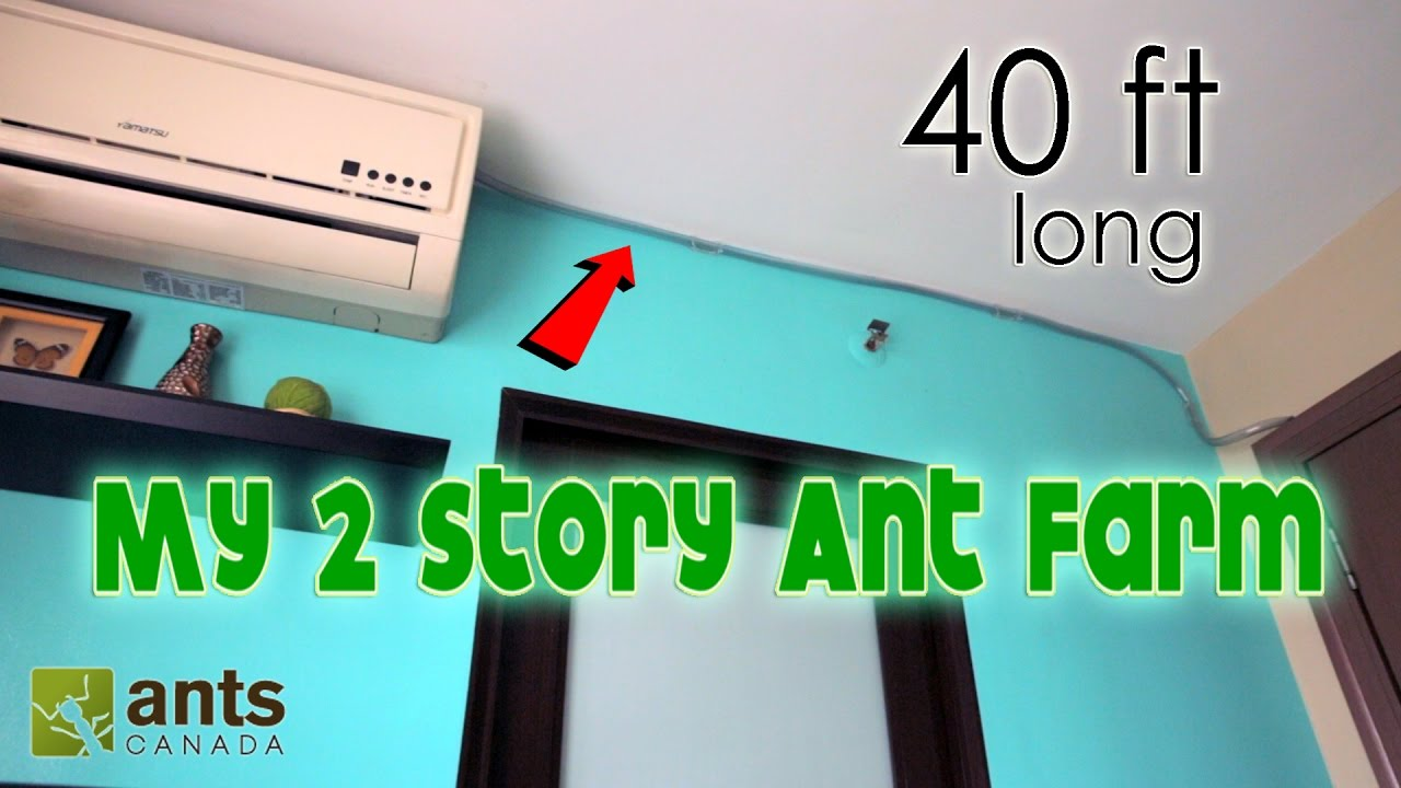 i-made-a-2-story-ant-farm-40-feet-long