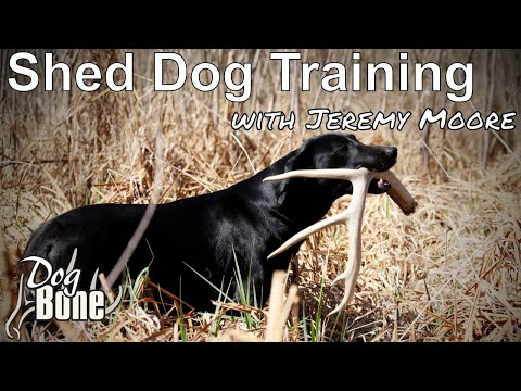Train Your Dog To Find Shed Antlers -DogBone Training System