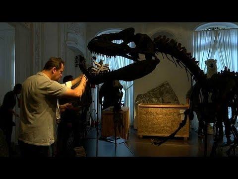 شاهد: ديناصوران للبيع في المزاد العلني في باريس  - نشر قبل 31 دقيقة