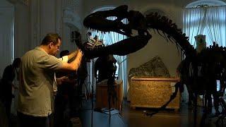 شاهد: ديناصوران للبيع في المزاد العلني في باريس