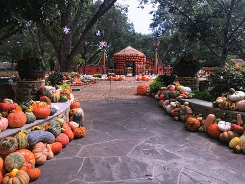 Dallas Arboretum Pumpkin Patch