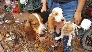 Explore the largest dog market in Vietnam Latest
