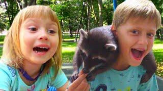 Едем в гости к енотам - милые животные   Видео для детей