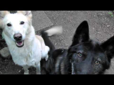 Iowa and Fresca JUMP!/ Alaskan Noble Companion Dog